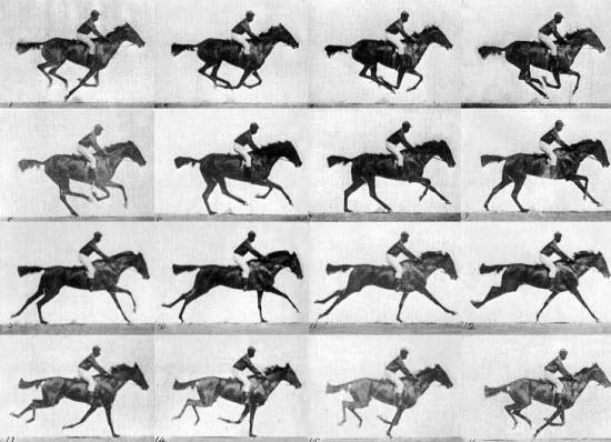 اسب در حال حرکت