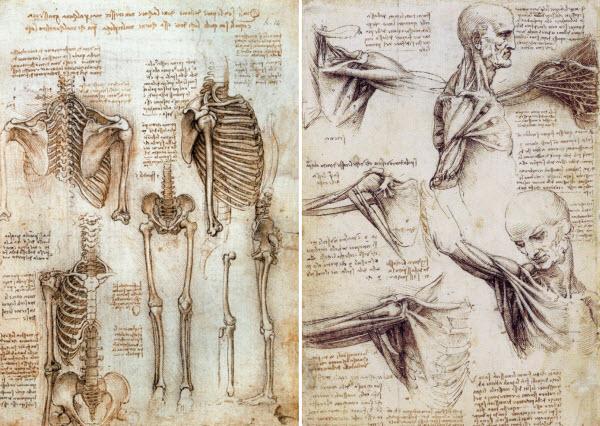 لئوناردو داوینچی - آناتومی