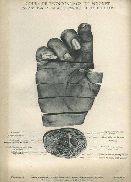 یک اطلس آناتومی