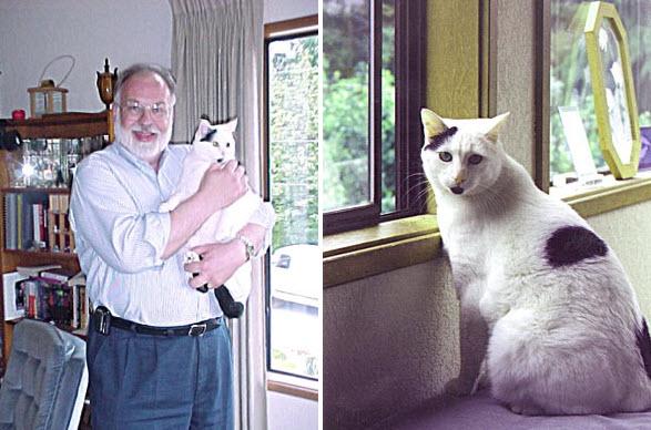 عکس جعلی گربه