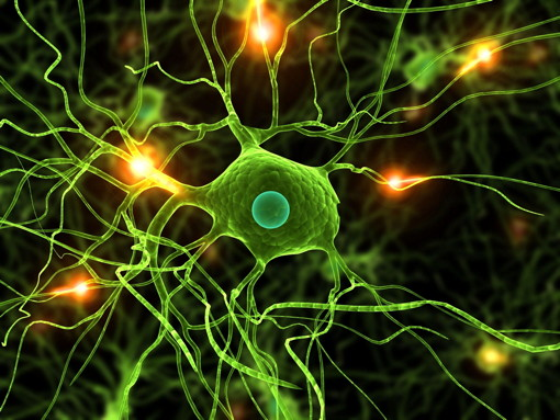 NYC_brain_neuron_illustration