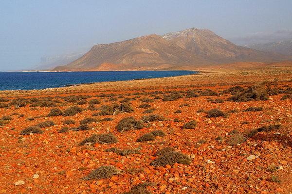 Socotra 3