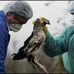 ایران و آنفلوانزای مرغی