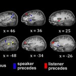 ارتباط کلامی خوب، یکسانکننده طول موج مغزها!
