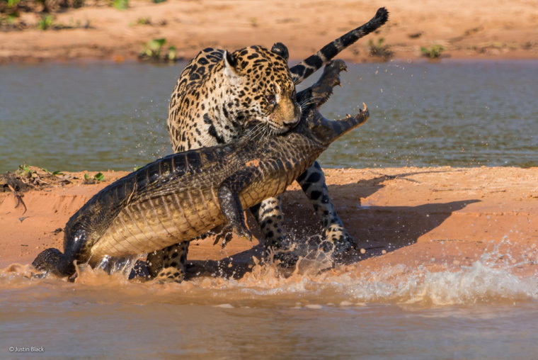 03-best-wildlife-pictures-2014