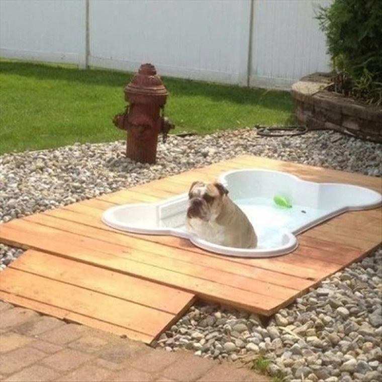 Bone-Shaped-Dog-Pool