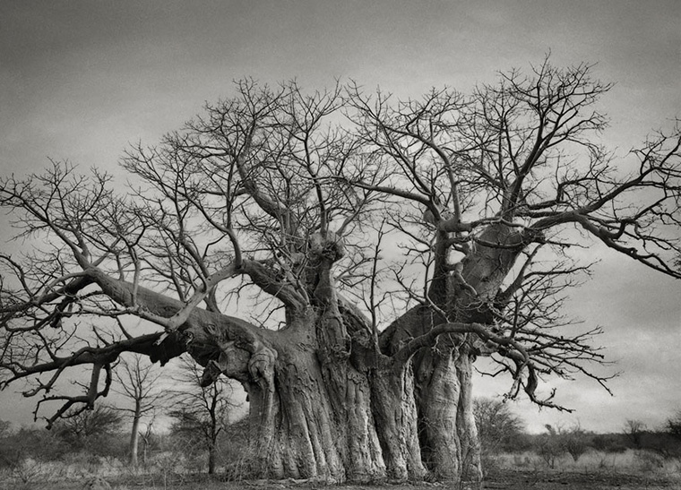 ancient-trees-beth-moon-3