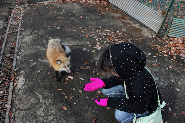 zao-fox-village-japan-6