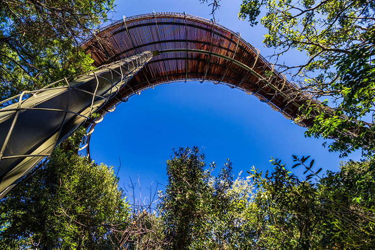 tree-canopy-walkway-path-kirstenbosch-national-botanical-garden-15