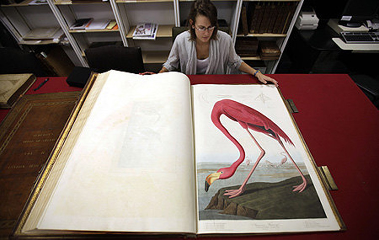 The-Birds-of-America-by-John-James-Audubon_f_improf_552x350