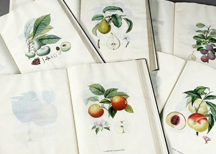 Treatise-on-Fruit-Trees_f_improf_533x381