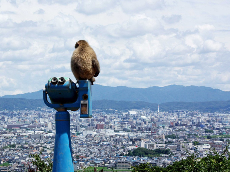 and-colonies-of-monkeys-live-here-some-of-which-hang-out-at-the-iwatayama-monkey-park