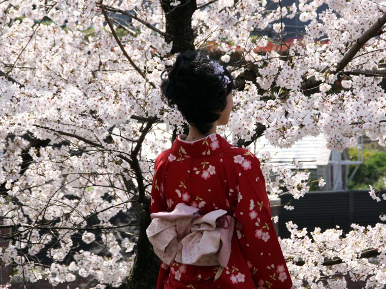 japan-is-famous-for-its-cherry-blossoms-and-kyoto-is-full-of-the-incredible-trees