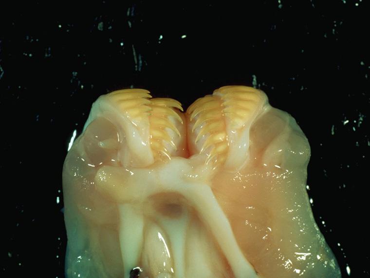 hagfish-corbis-01a-1024x768