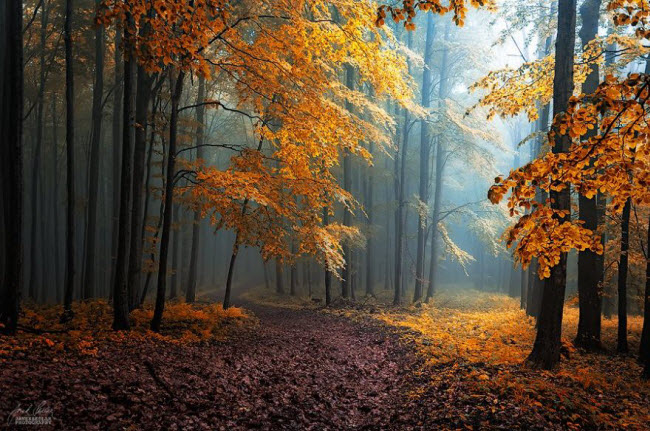 dreamlike-autumn-forests-janek-sedlar-11__880