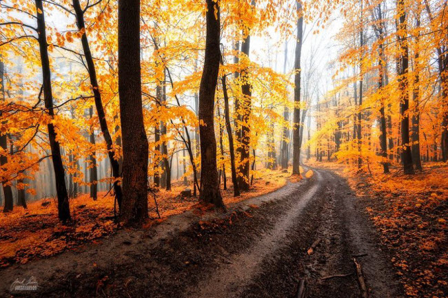 dreamlike-autumn-forests-janek-sedlar-16__880