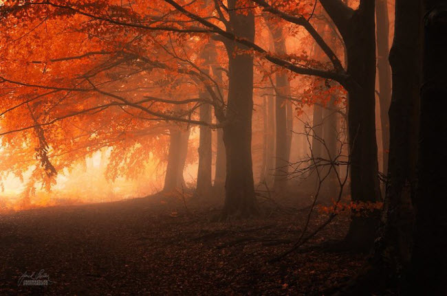 dreamlike-autumn-forests-janek-sedlar-17__880