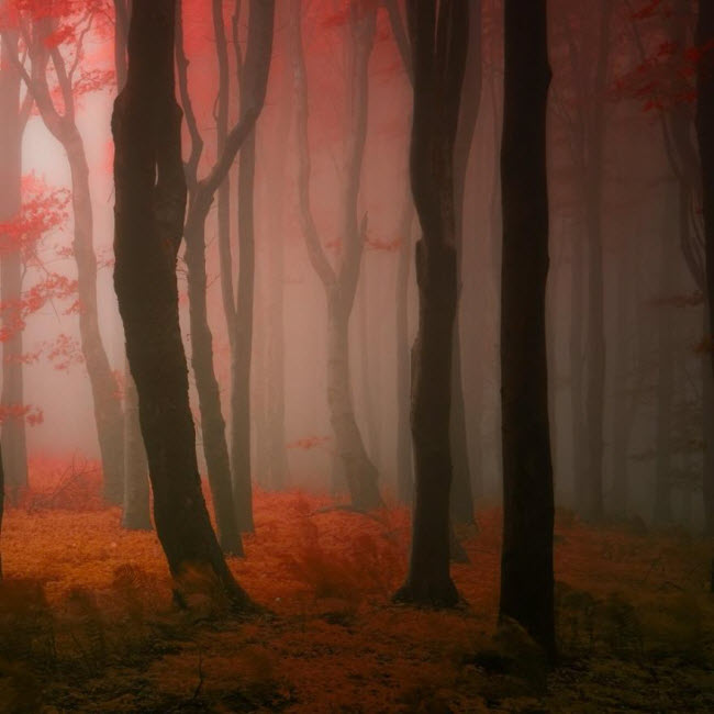 dreamlike-autumn-forests-janek-sedlar-2__880