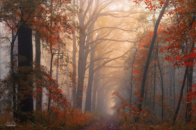 dreamlike-autumn-forests-janek-sedlar-38__880