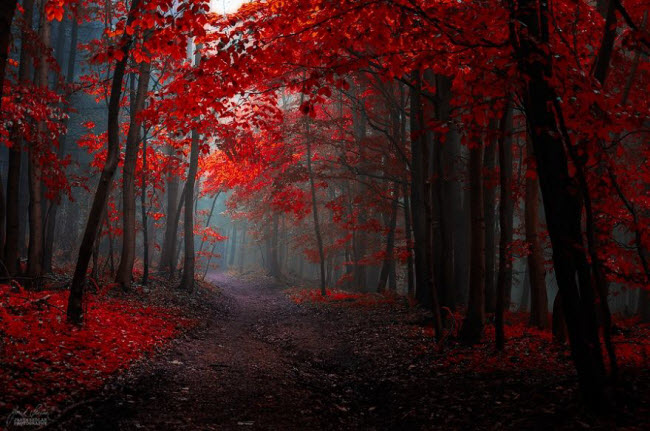 dreamlike-autumn-forests-janek-sedlar-5__880