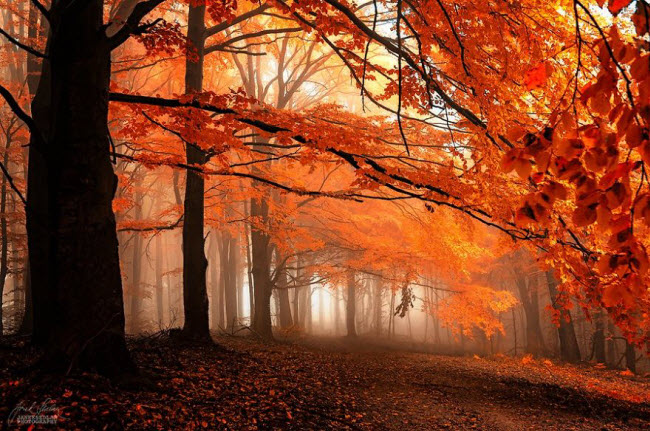 dreamlike-autumn-forests-janek-sedlar-7__880