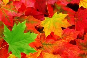 پاییز برگ زرد