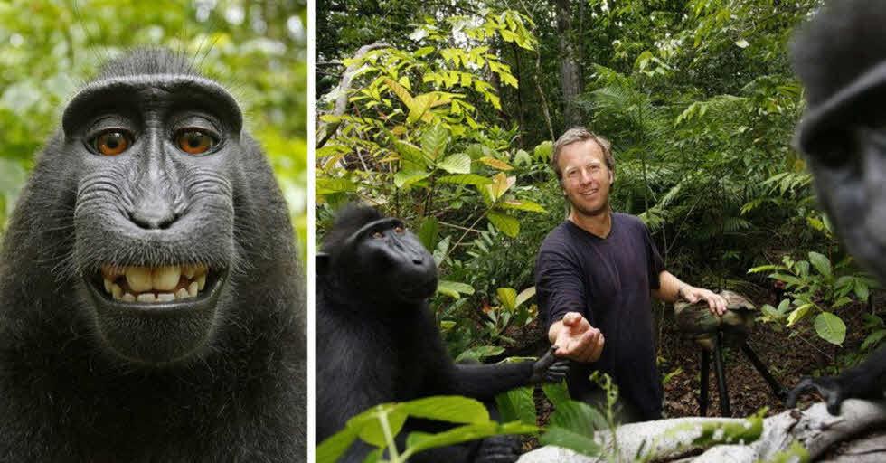 عکاسی که بعد از شکایت یک میمون برای کپیرایت یک عکس مشهور، به خاک سیاه نشست!