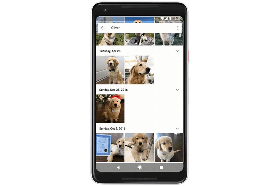 حالا سرویس عکس گوگل، می تواند حیوانات خانگی شما را در تصاویر شناسایی و گروه بندی کند